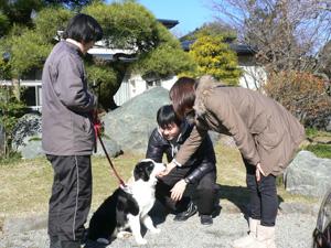 訓練犬 ボーダーコリー
