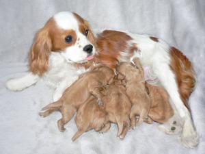 プーリアの子犬