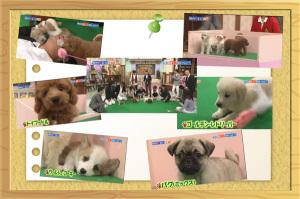TV出演犬